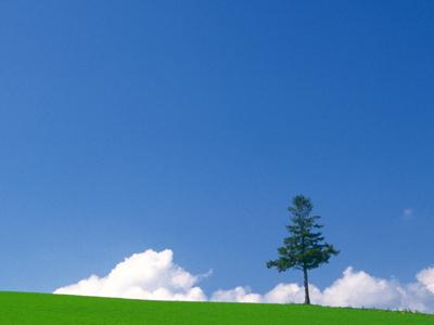 大空に映える大木